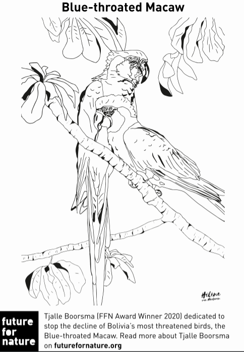 Ffn Animal Colouring Pages Future For Nature